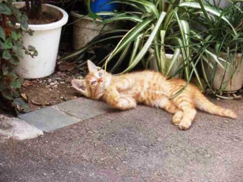 寝転がるネコ