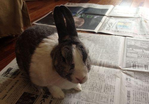ウサギの写真 (3)
