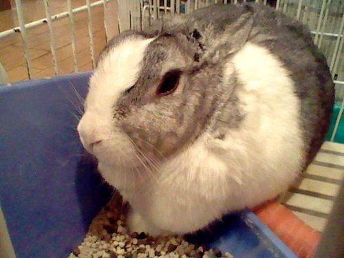 ウサギの写真 (1)