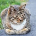 夢見心地の猫